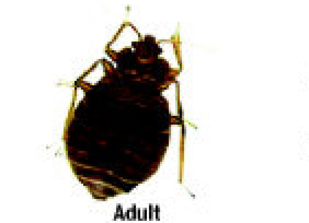 Professional Expert Bed bug control Extermination Service