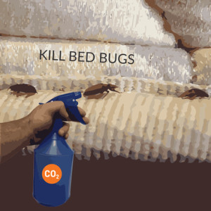 do on your own bed bug control